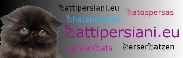 persians cats catteries breeders