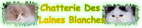 banniere chatterie laines blanches