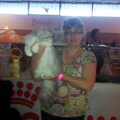 expositions felines chats persans
