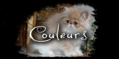 couleurs chat persan